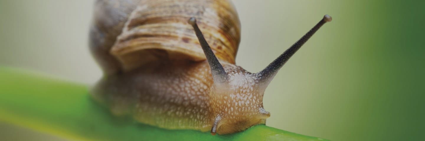 snail farming franchise opportunities